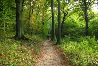 Klassenfahrtenfuchs - Klassenfahrt Eibenstock - Waldwege