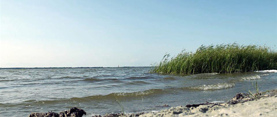 Darßer Boddenküste