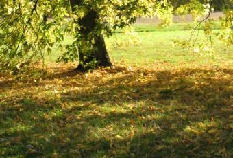 Klassenfahrtenfuchs - Klassenfahrten A&O Nebensaison - Herbstimpressionen