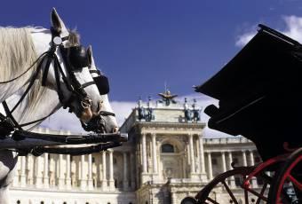 Klassenfahrtenfuchs - Klassenfahrt Wien - Fiaker