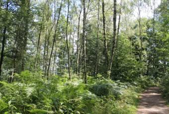 Klassenfahrtenfuchs - Klassenfahrt Saechsische Schweiz - Waldimpression