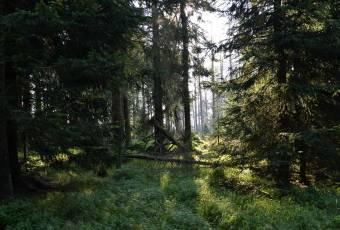 Klassenfahrtenfuchs - Klassenfahrt Altenau - Waldidylle
