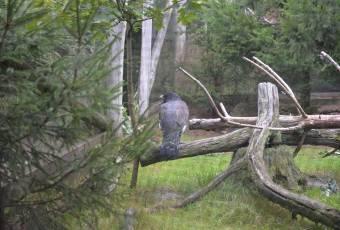 Klassenfahrtenfuchs-Klassenfahrt Güntersberge-Fauna